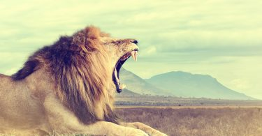 astrologyhub-leonewmoon-roar